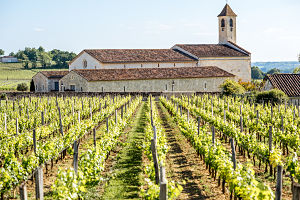 Pour Yourself Some Bordeaux—the Vinicultural Gift of France